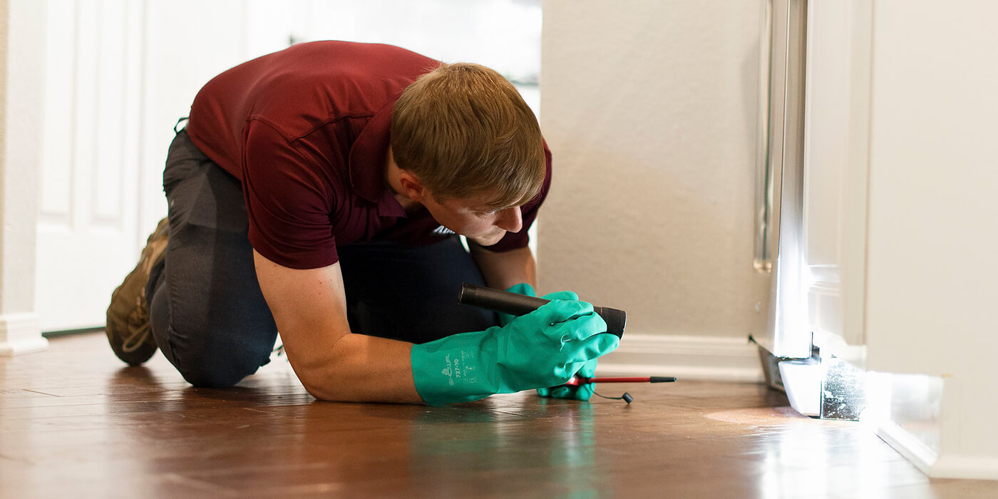 an ABC pest specialist searching a home for fleas