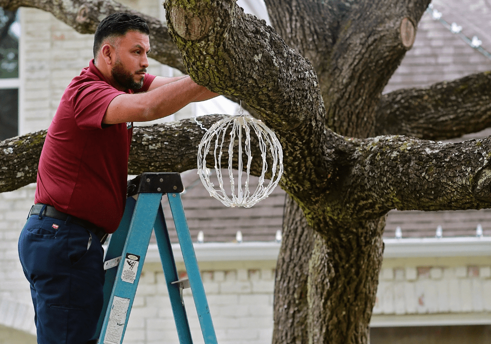 a team member hanging holiday lighting at a business