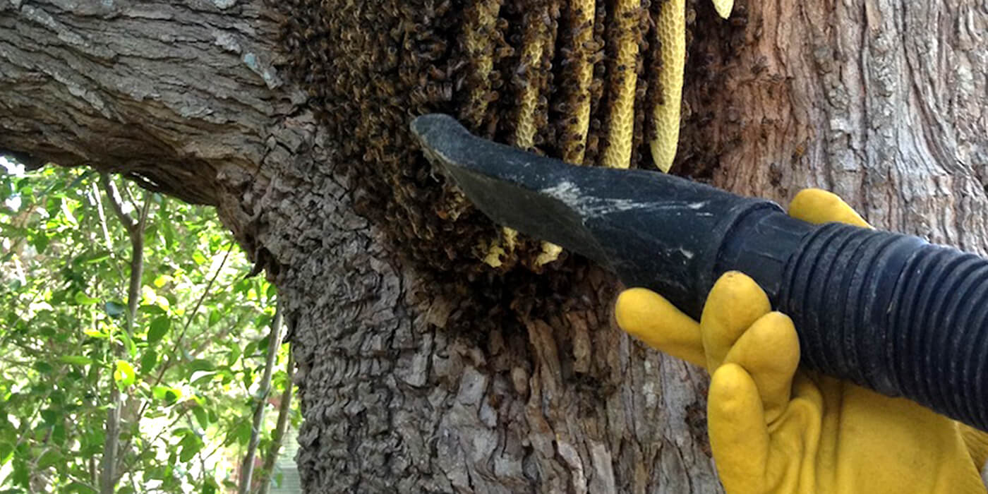 a pest control specialist removing bees from a nest