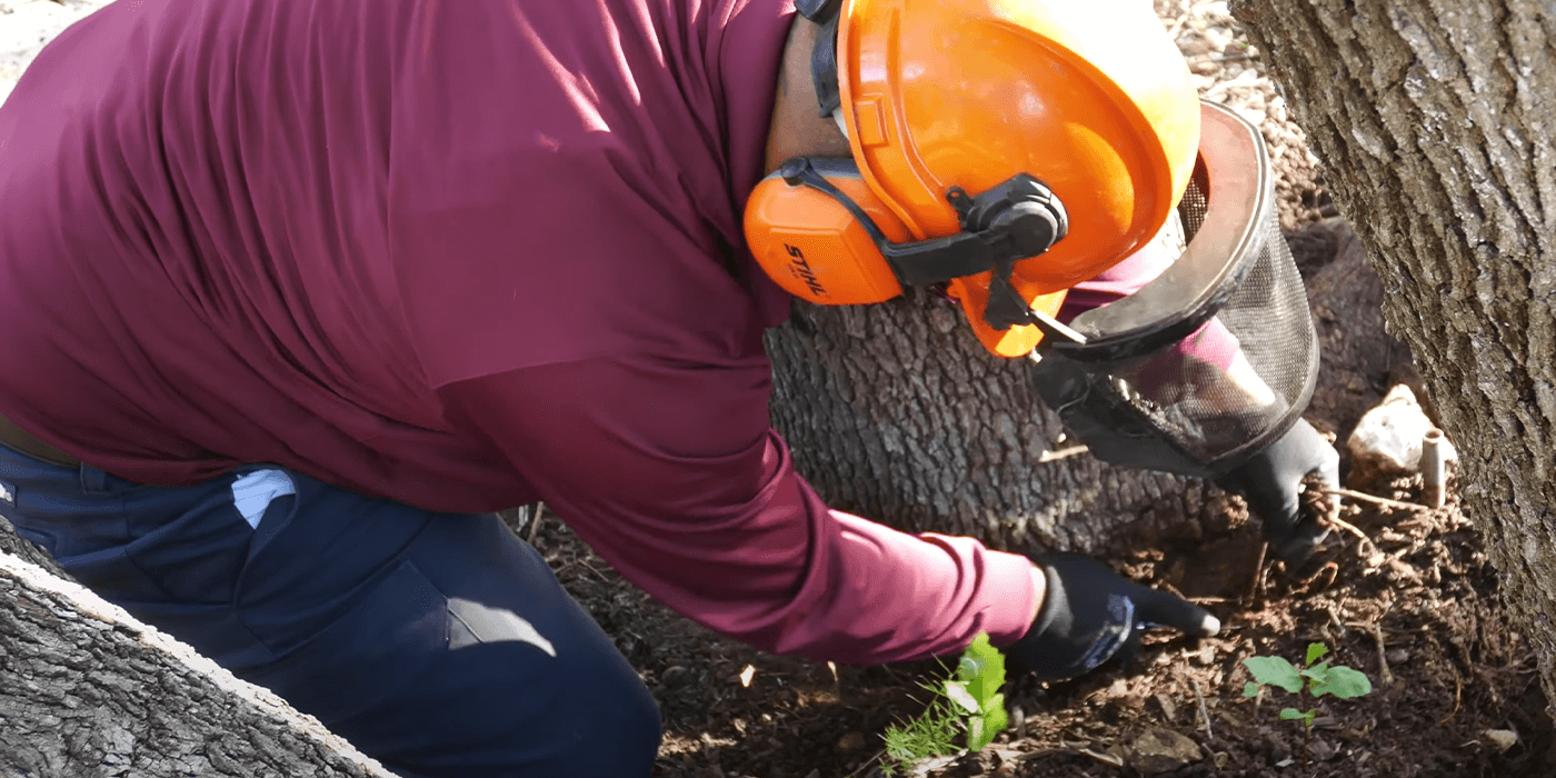 tree care specialists performing tree air excavation services for a customer