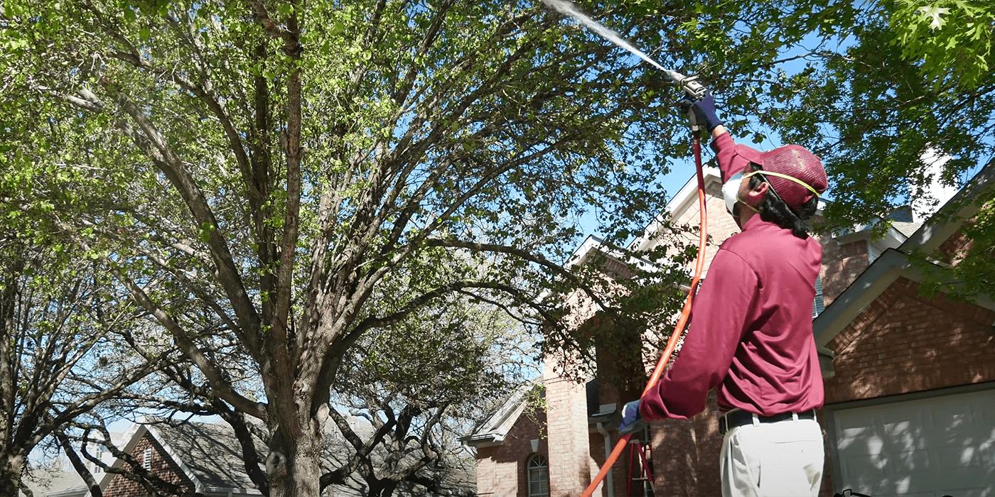 Especialistas de ABC brindando servicios de poda y mantenimiento de árboles