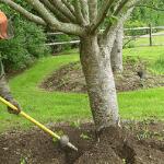 un especialista en cuidado de árboles de ABC brindando servicios de aireación de árboles