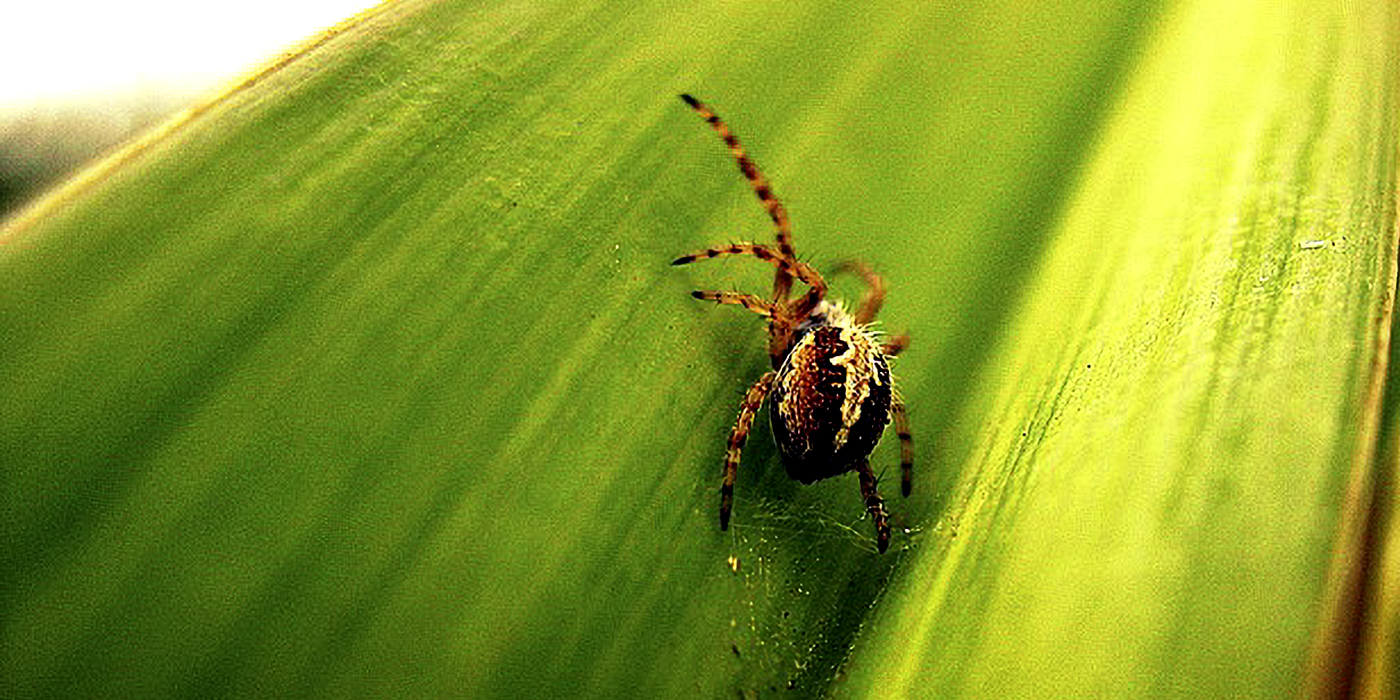 a spider crawling on a leaf